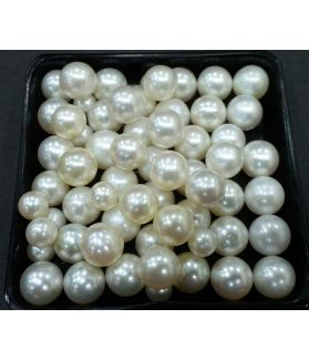 Round Shaped South Sea Pearl Undrilled 225/250_54