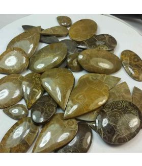 100 % Natural Morocco Fossil Coral Wholesale Lot Gemstone