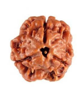 Three Mukhi Nepali Rudraksha 15-20 mm