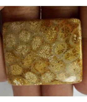 32.25 Carats Fossil Coral 29.45 x 24.58 x 4.75 mm