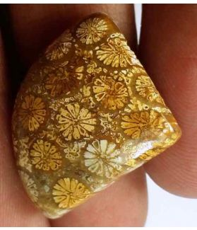 14.75 Carats Fossil Coral 18.64 x 17.04 x 5.91 mm