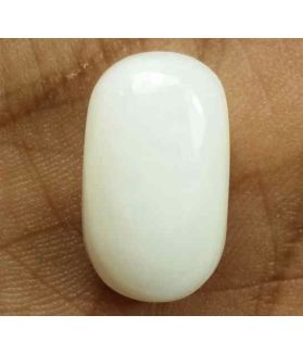 13.35 Carats Italian White Coral 17.49 x 10.35 x 7.38 mm