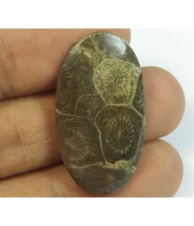 16.40 Carats Morocco Fossil Coral 31.40 x 17.14 x 3.93 mm