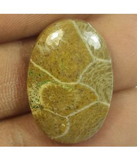 12.82 Carats Morocco Fossil Coral 22.19 x 15.37 x 4.56 mm