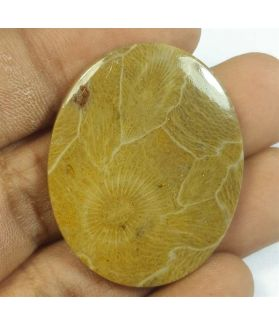 45.20 Carats Morocco Fossil Coral 36.57 x 29.12 x 4.75 mm