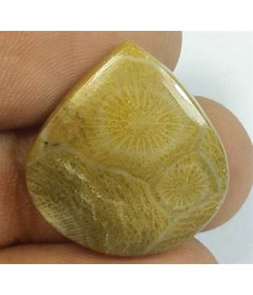 16.60 Carats Fossil Coral Morocco 1.96 x 20.70 x 4.63 mm