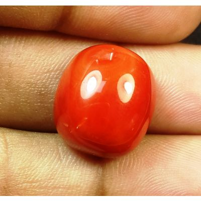 16.94 Carats Natural Italian Red Coral 16.09x14.21x8.68mm