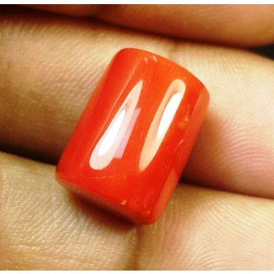 15.51 Carats Natural Italian Red Coral 14.12x11.02x9.50mm