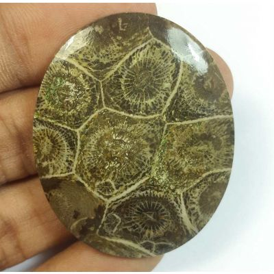 57.83 Carats Morocco Fossil Coral 43.97 x 35.98 x 4.69 mm
