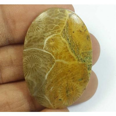 48.31 Carats Morocco Fossil Coral 38.29 x 25.47 x 5.88 mm