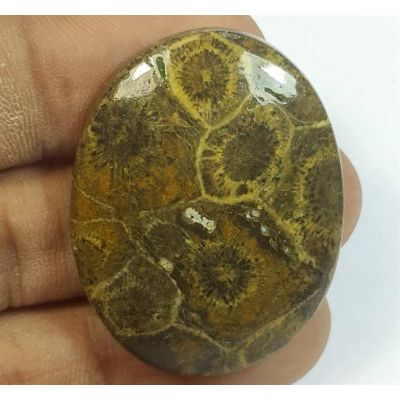 61.59 Carats Morocco Fossil Coral 37.26 x 29.19 x 7.31 mm