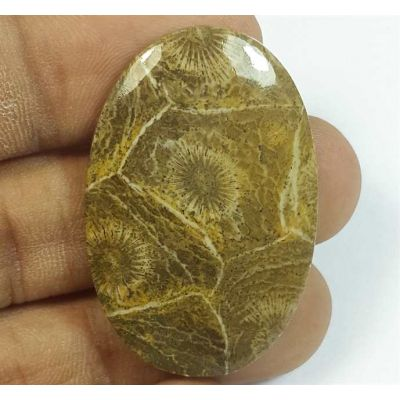 36.03 Carats Morocco Fossil Coral 37.66 x 24.98 x 4.54 mm