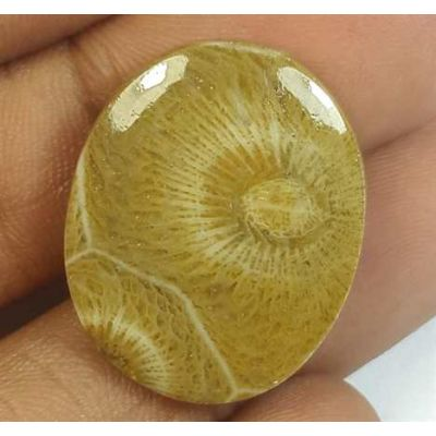 15.02 Carats Morocco Fossil Coral 22.95 x 18.61 x 3.93 mm