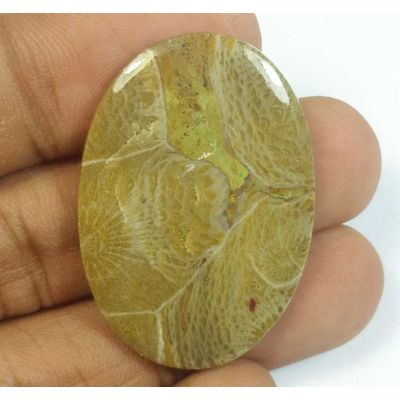 32.24 Carats Morocco Fossil Coral 35.92 x 25.18 x 4.16 mm