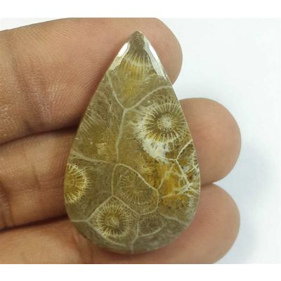 30.85 Carats Fossil Coral Morocco 34.80 x 21.25 x 5.52 mm