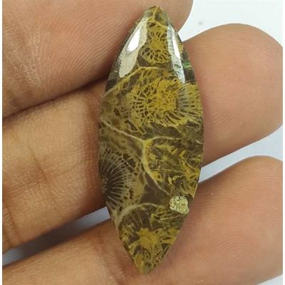 12.00 Carats Fossil Coral Morocco 31.89 x 12.64 x 3.80 mm