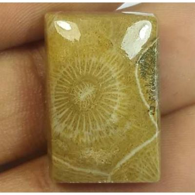 19.21 Carats Fossil Coral Morocco 21.18 x 14.27 x 6.04 mm