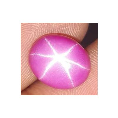 10.27 Carats Star Ruby 15.50 x 14.84 x 4.05 mm