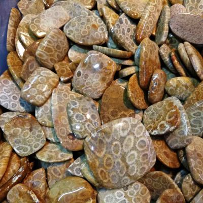 Fossil Coral Wholesale Lot Gemstone